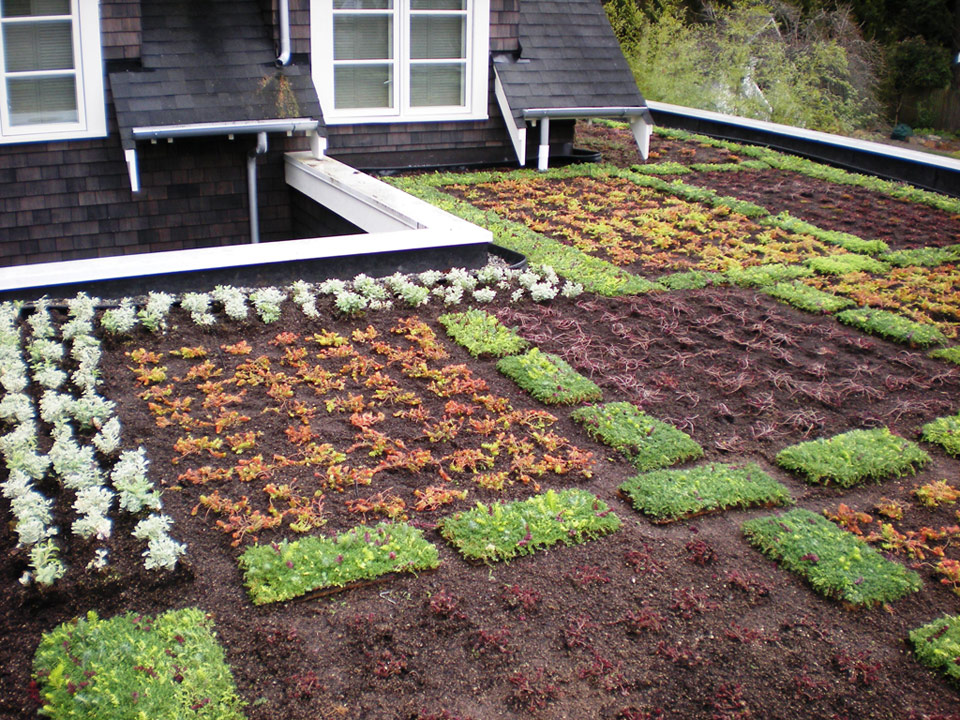 Green-Roof-1