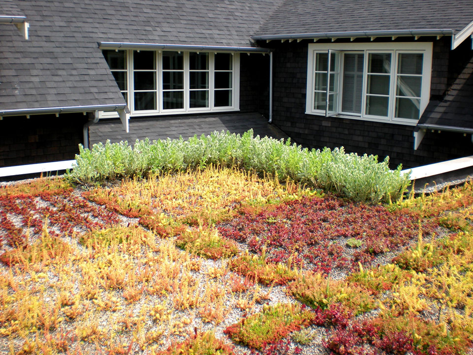 Green-Roof-5