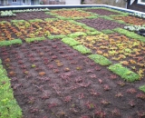 Green-Roof-2